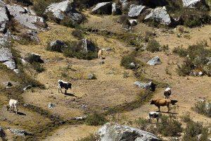 Peru_2011_09_05_0799