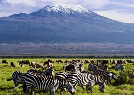 6 days masai mara lake nakuru amboseli with terminal tours kenya