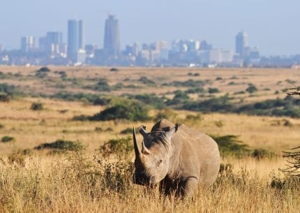 1 Day Nairobi National Park