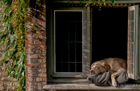 Brugge's most famous dog Fidel takes a nap on his pillow over the canal in Brugge, Belgium