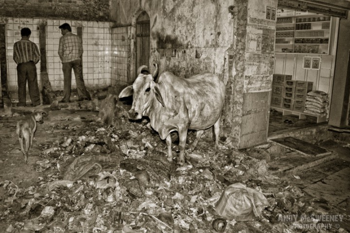 A shop, a cow standing on a garbage belt, a dog, filthy walls and two men peeing on the dirty street of Margao, South-India