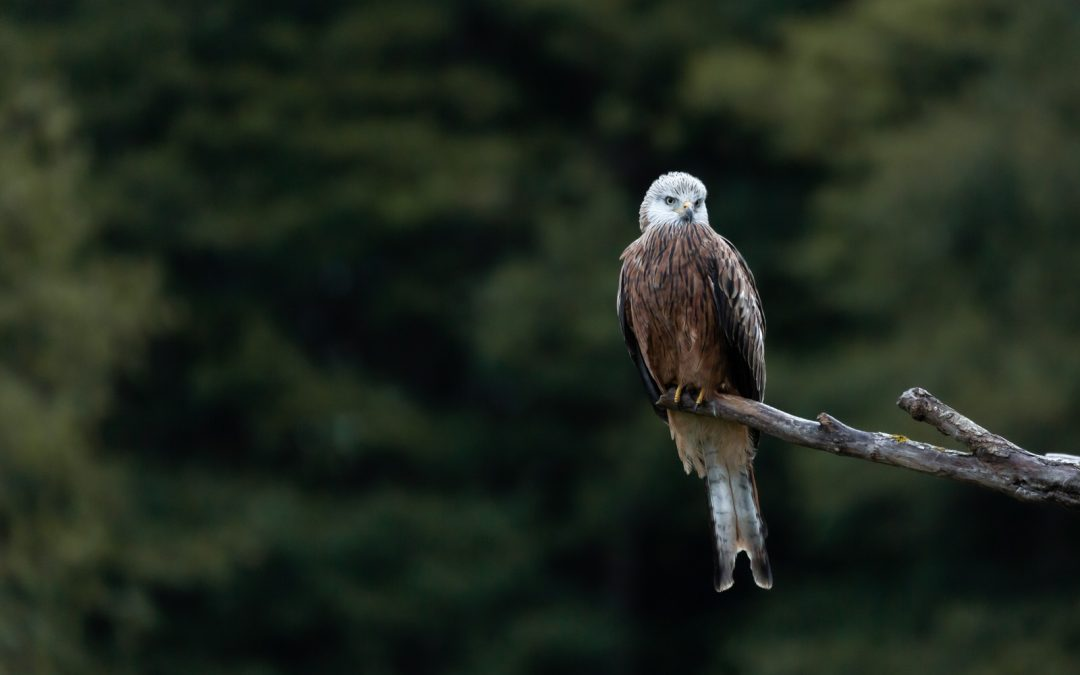 Another dream has come true - I have photographed another delicious bird of prey