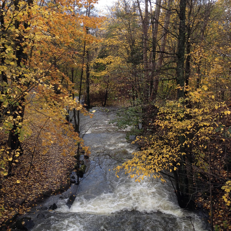 oslo, park, autumn, travel