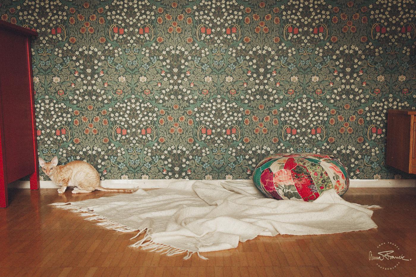 anna, franck, photography, baby, vauva, valokuvaus, barnfotografering, åbo, turku, natural, familjefotograf, stockholm, onlocation, retro, homestudio
