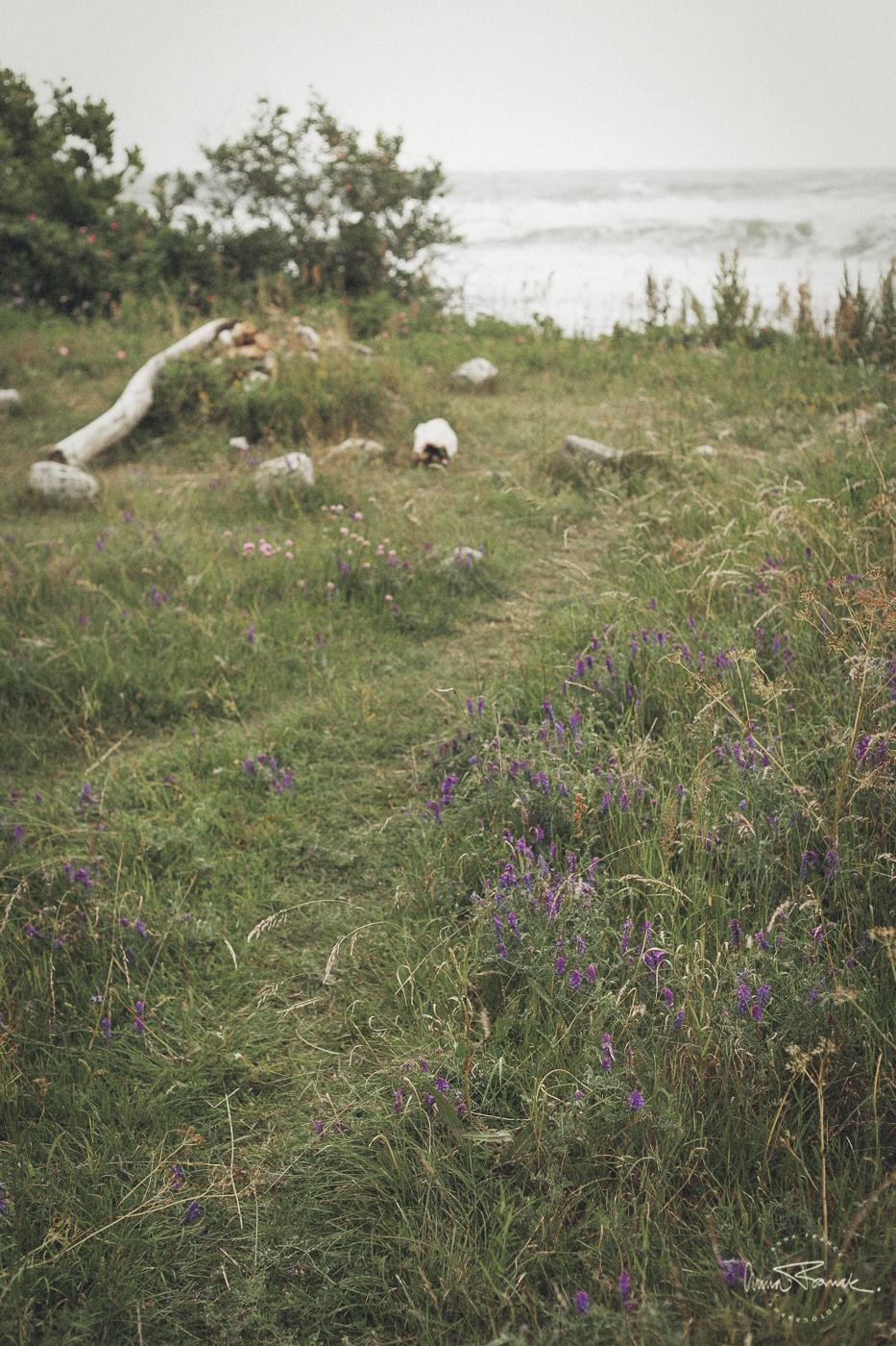 anna, franck, photography, stockholm, photographer, pargas, finland, sweden, portraits, skåne, österlen, baskemölla, natural, green, summer, countrylife, coast, beach, architecture, lifestyle, organicliving