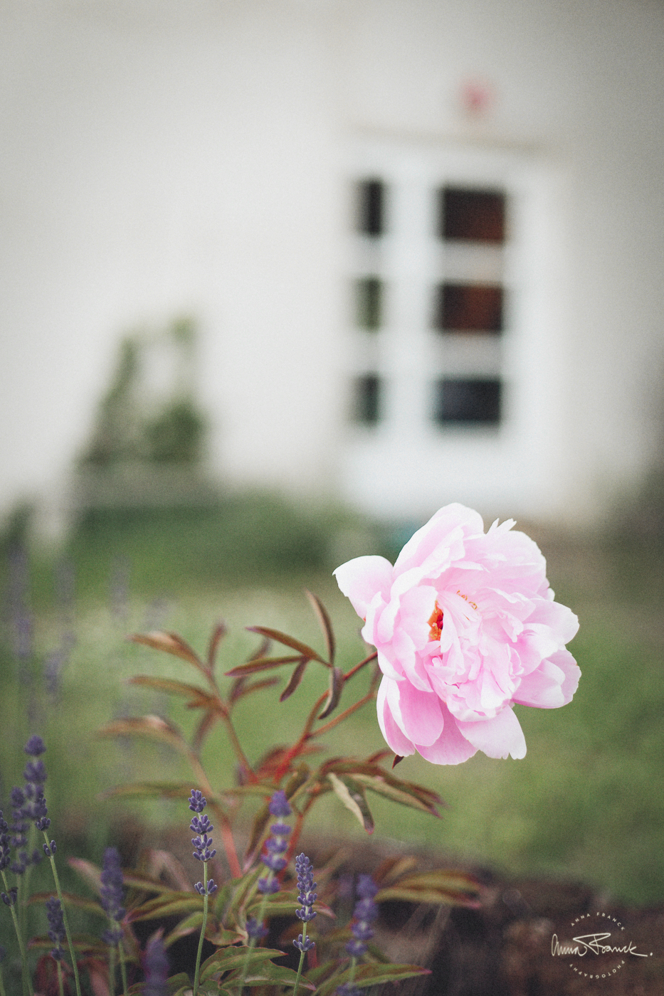 anna, franck, photography, onlocation, skåne, brösarp, home, design, decorating, interior, details, flowers, rural, house, home, nordic, artistic, bohemian