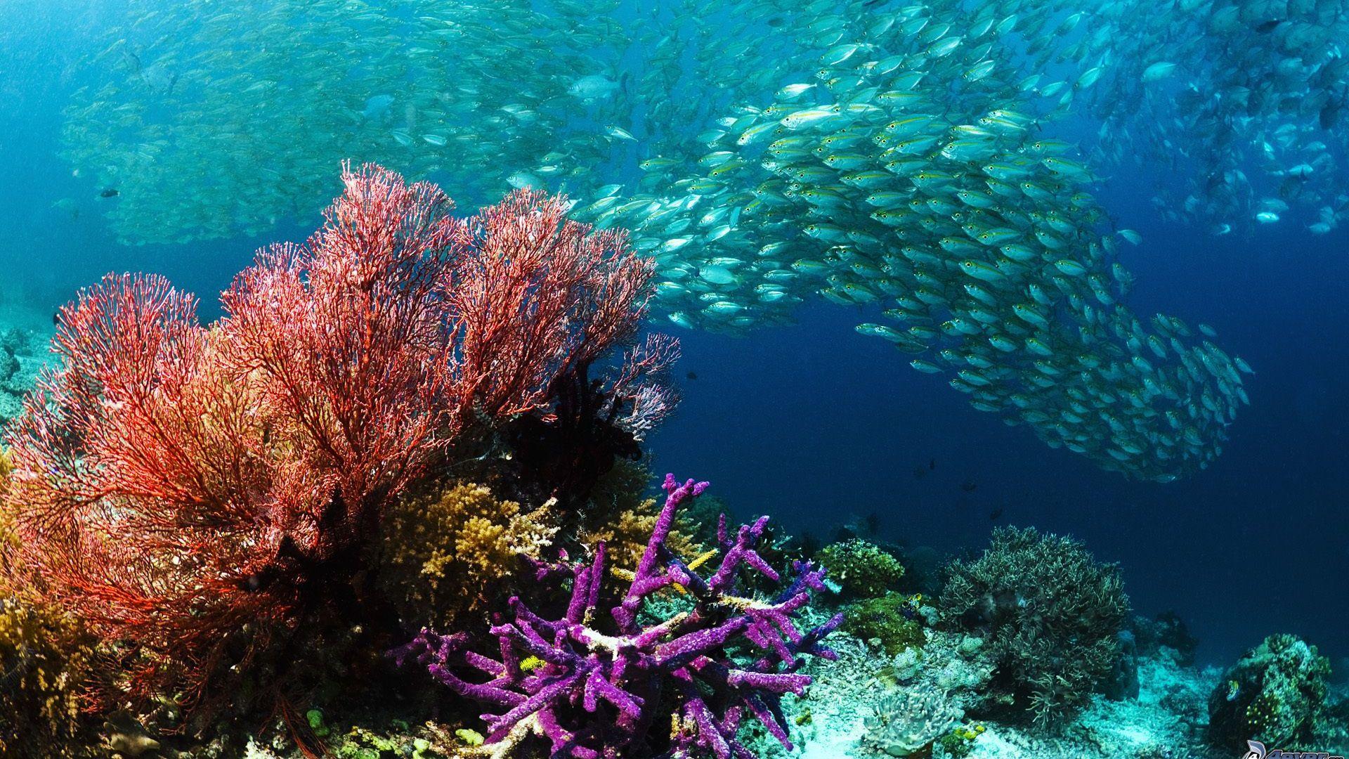 Acidificazione oceani, a rischio biodiversità