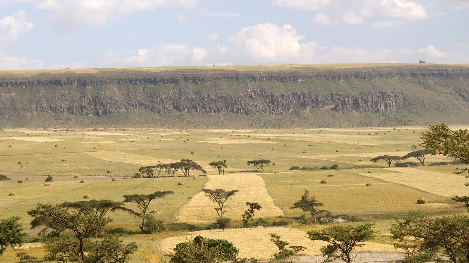 Climi aridi