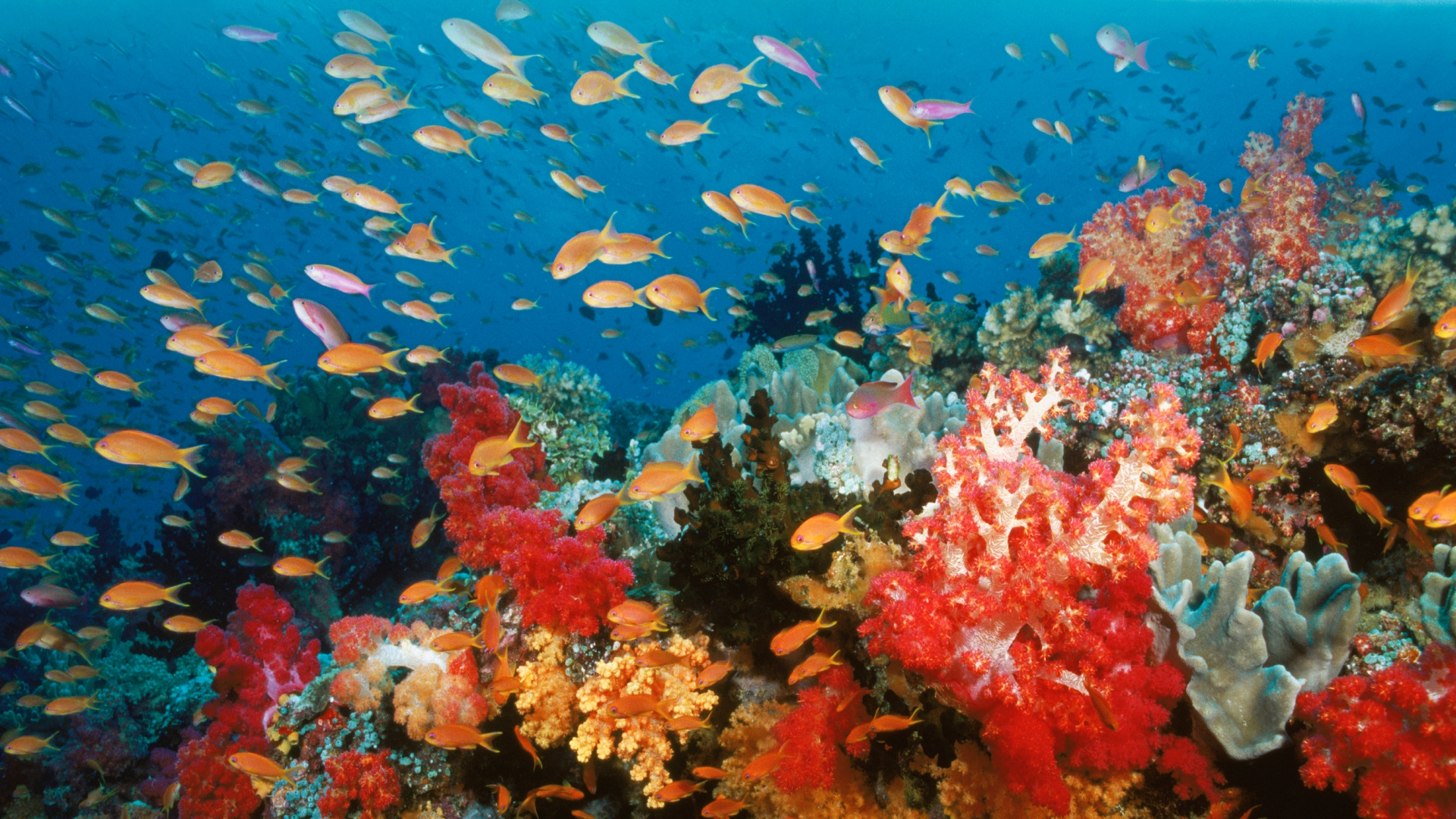 Devastazione degli Oceani entro il 2100