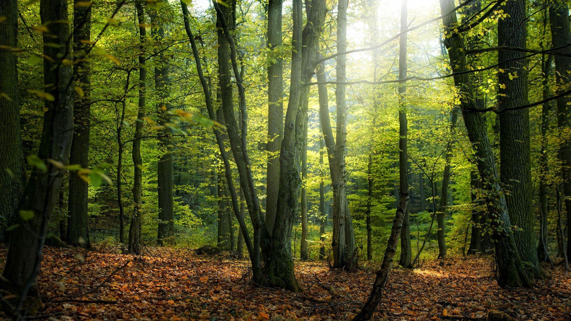 Foresta Mista