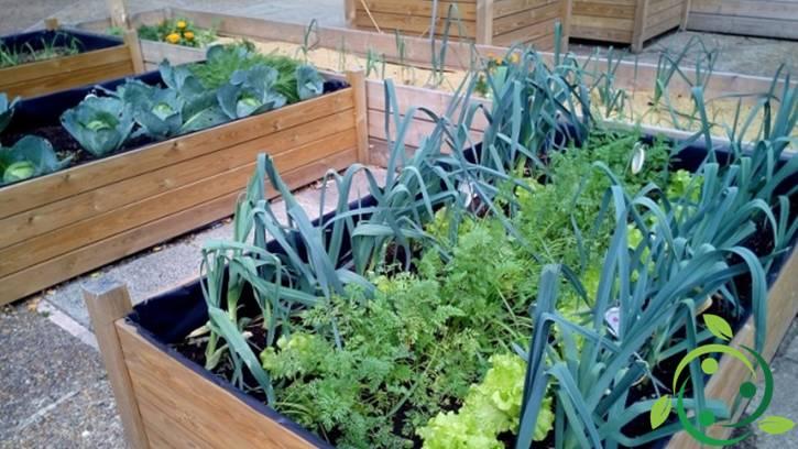 Come realizzare un orto in casa
