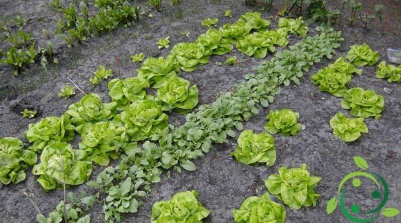 Come realizzare un orto biologico