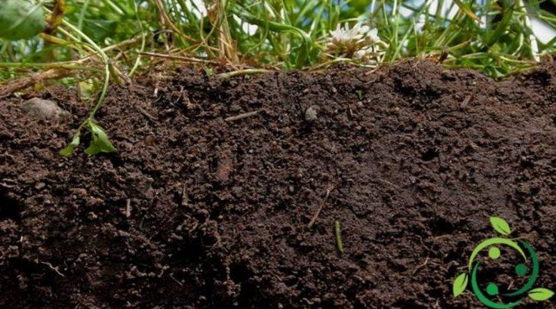 Come alzare il pH del Terreno con metodi naturali