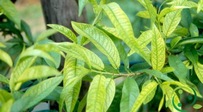 Come apportare ferro alle piante in maniera naturale