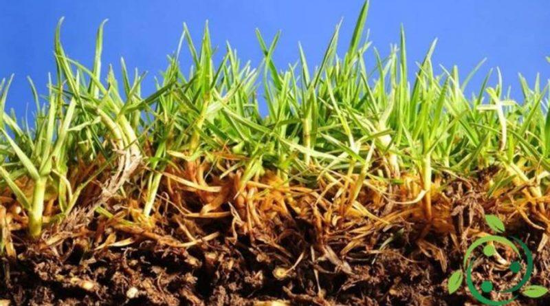 Tecnica della micorizzazione in agricoltura ed in orticoltura