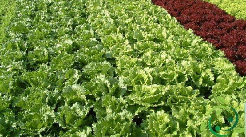 Bio Fertilizzante fai da te
