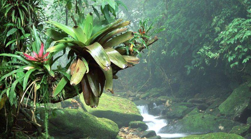 Foresta tropicale di Sumatra