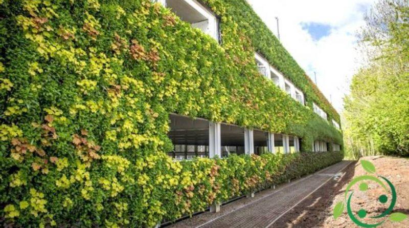 Come realizzare una parete verticale verde