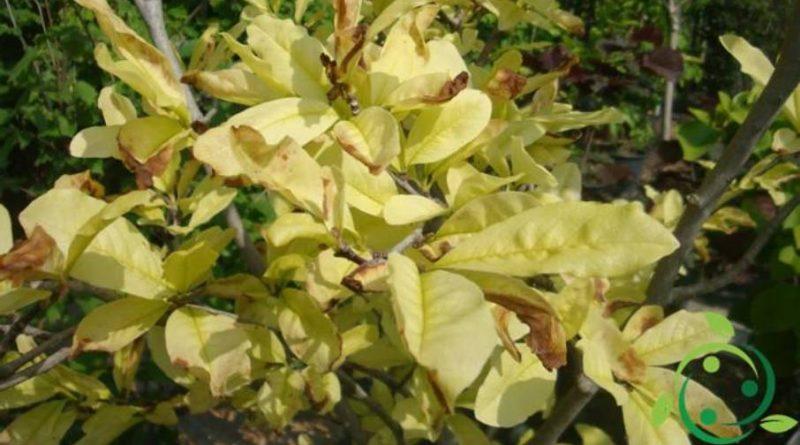Ruolo del Nichel nelle piante