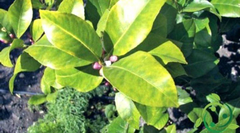 Ruolo del Cobalto nelle piante
