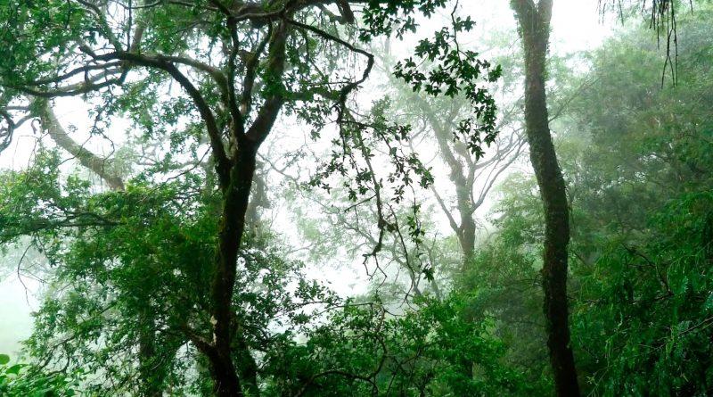 Foresta pluviale temperata di Valdivia