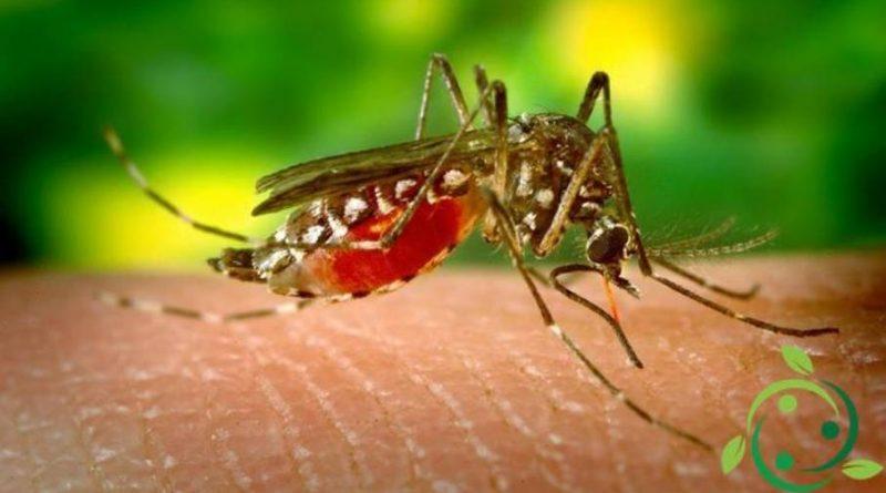 Ruolo Ecologico delle Zanzare