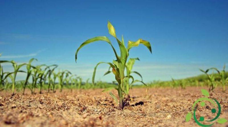 Ruolo del silicio nelle piante