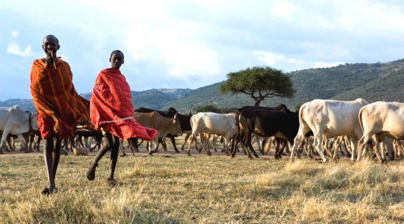 I Masai e l'agricoltura