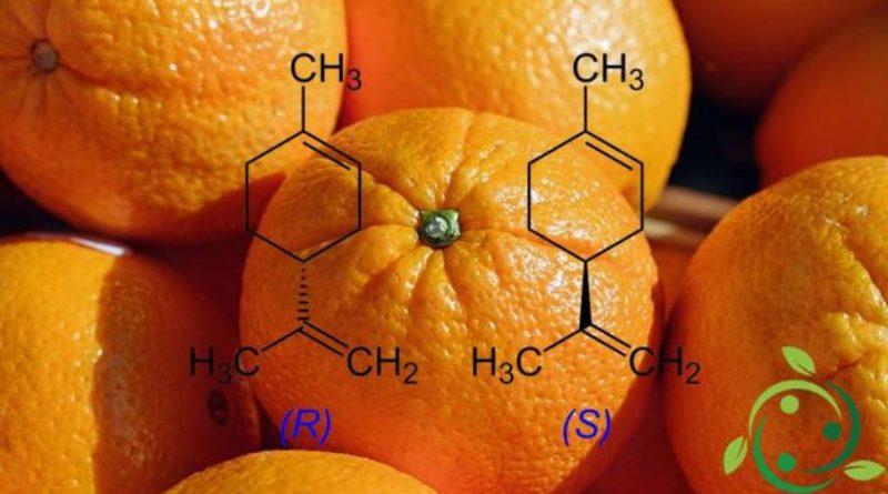 Insetticida naturale a base di limonene