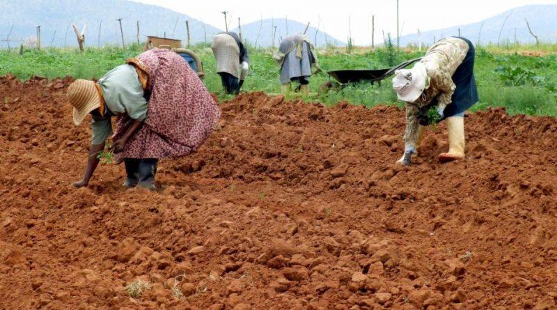 Gli Zulù e l'agricoltura