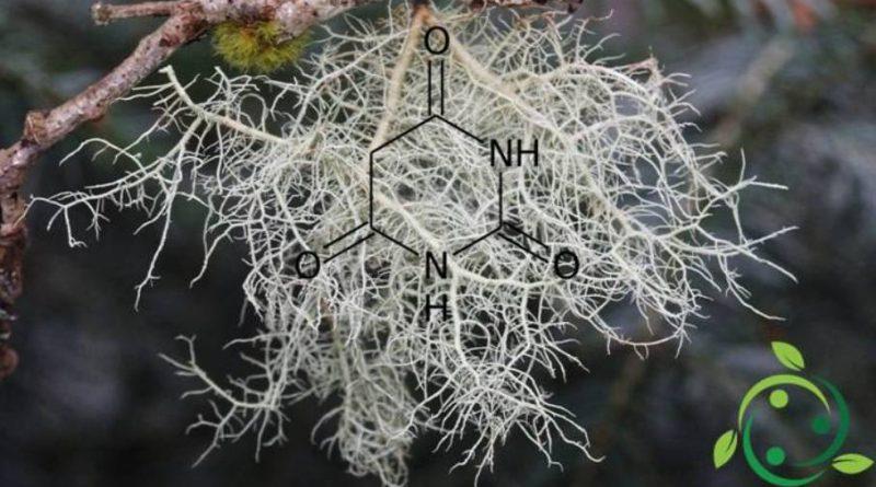 Acido barbiturico