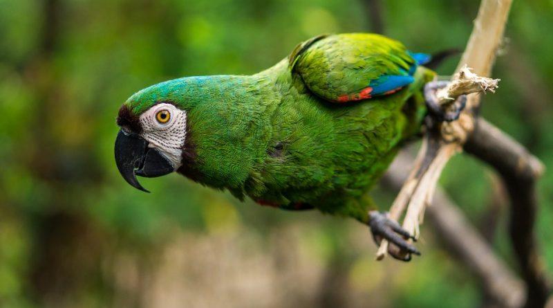 Il ruolo ecologico degli Uccelli
