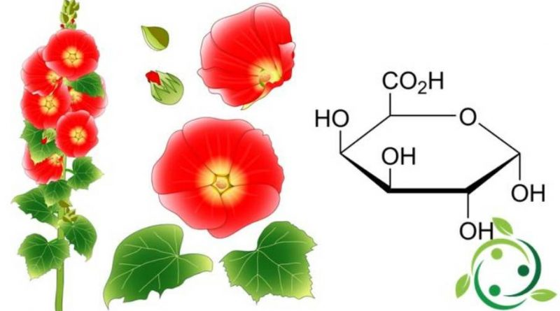 Acido galatturonico
