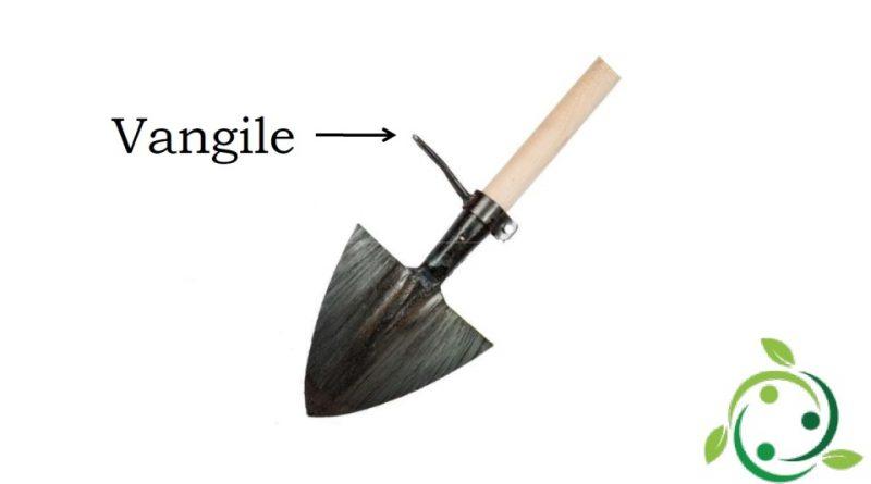 Vangile