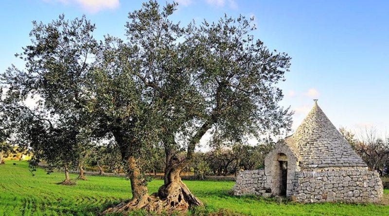 Antichi popoli pugliesi e l'agricoltura