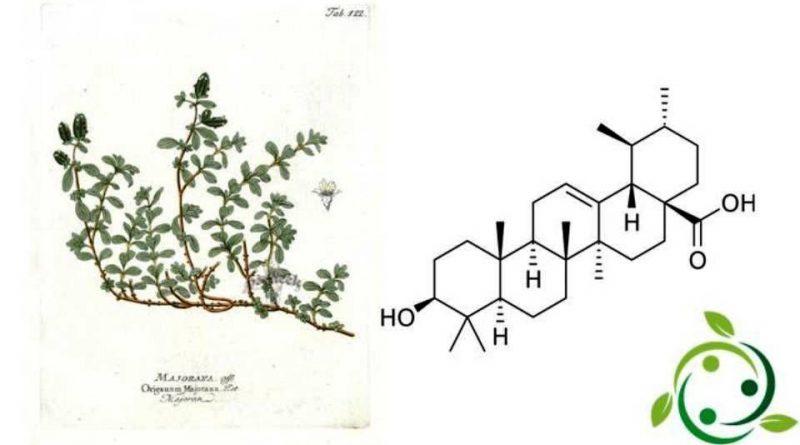 Acido ursolico