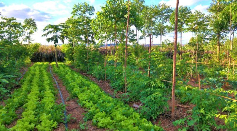 Come Progettare l'Azienda Agroecologica
