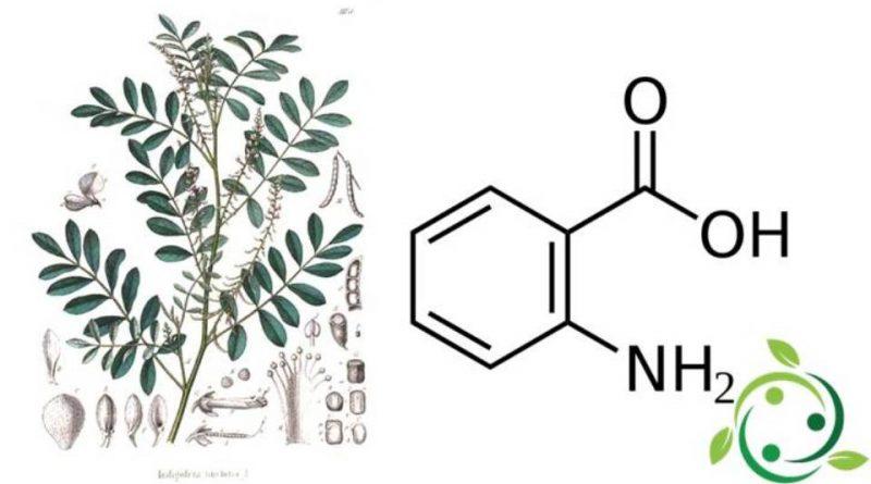 Acido Antranilico
