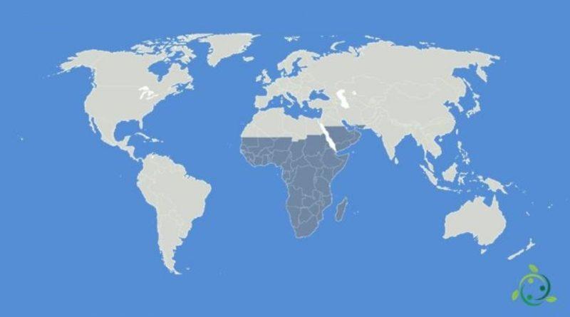 Ecozona afrotropicale