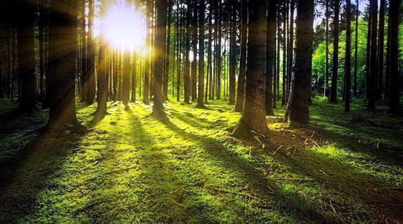 Serve visione diversa per proteggere la biodiversità