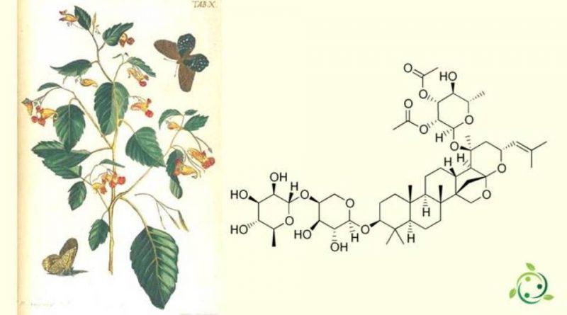 Zizifina