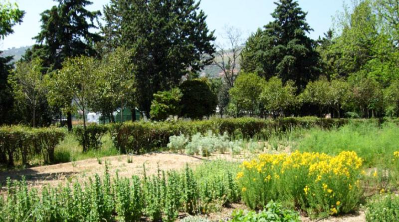 Campo catalogo di piante officinali