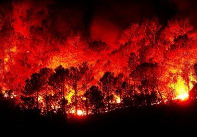 Incendi e responsabilità politica