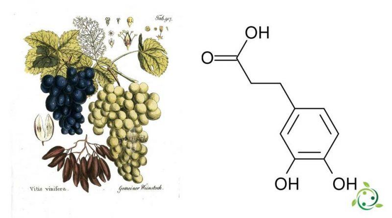 Acido diidrocaffeico