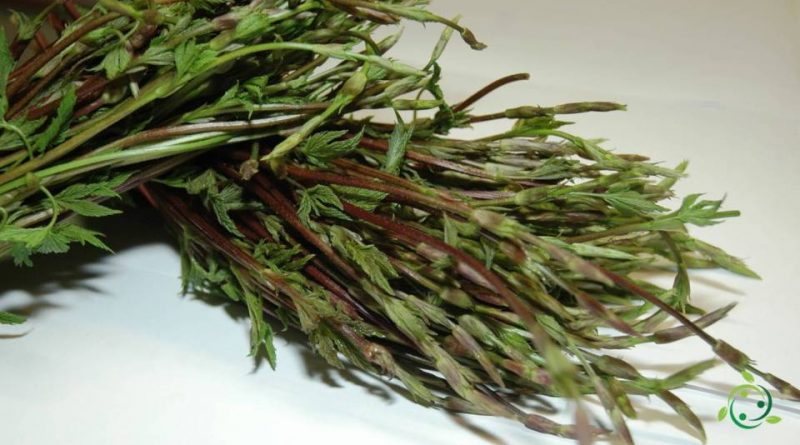 Valore nutrizionale dell'Asparagina