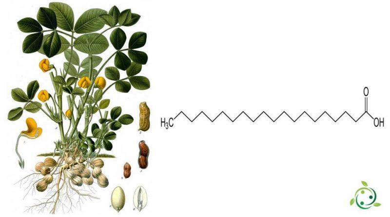 Acido arachico