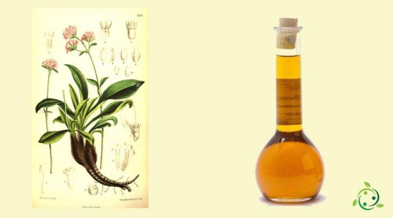 Olio essenziale di Nardo
