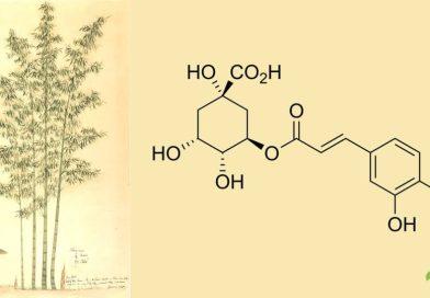Acido clorogenico
