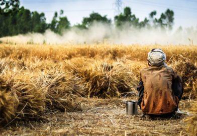 La Farm to Fork faccia tesoro della Legge Siciliana