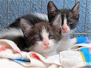 Kitten fosterers needed